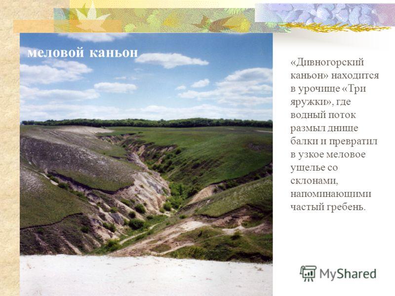 «Дивногорский каньон» находится в урочище «Три яружки», где водный поток размыл днище балки и превратил в узкое меловое ущелье со склонами, напоминающими частый гребень. меловой каньон