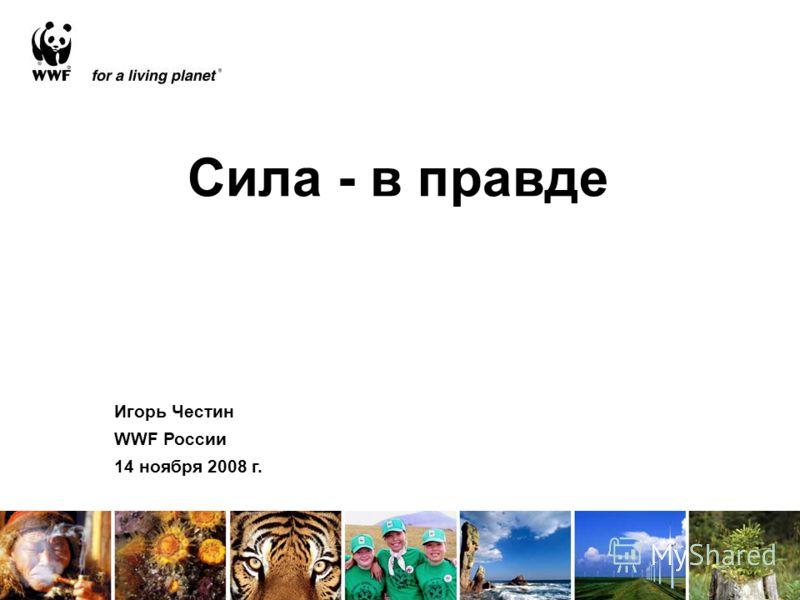Сила - в правде Игорь Честин WWF России 14 ноября 2008 г.
