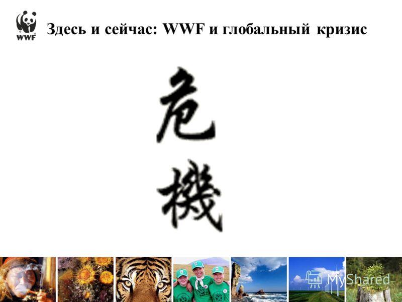 Здесь и сейчас: WWF и глобальный кризис