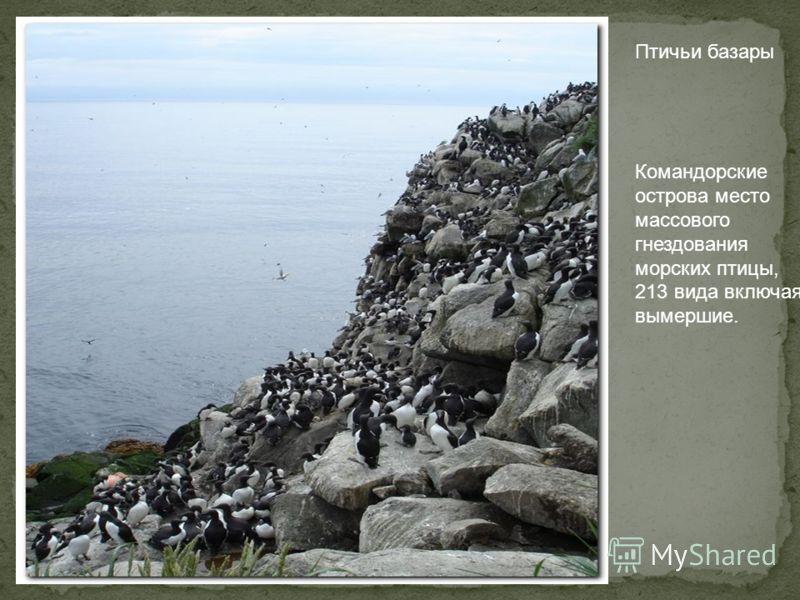 Птичьи базары Командорские острова место массового гнездования морских птицы, 213 вида включая вымершие.