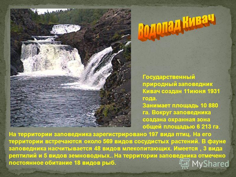 Государственный природный заповедник Кивач создан 11июня 1931 года. Занимает площадь 10 880 га. Вокруг заповедника создана охранная зона общей площадью 6 213 га. На территории заповедника зарегистрировано 197 вида птиц. На его территории встречаются
