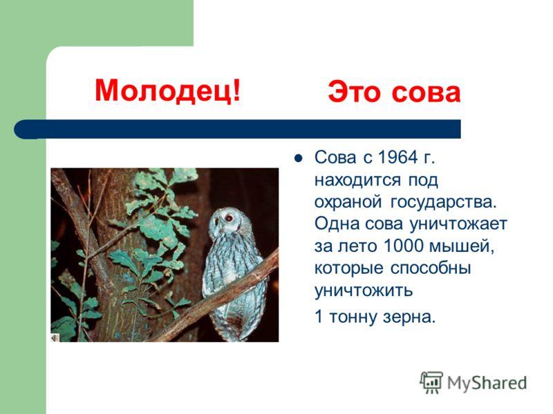 Молодец! Сова с 1964 г. находится под охраной государства. Одна сова уничтожает за лето 1000 мышей, которые способны уничтожить 1 тонну зерна. Это сова