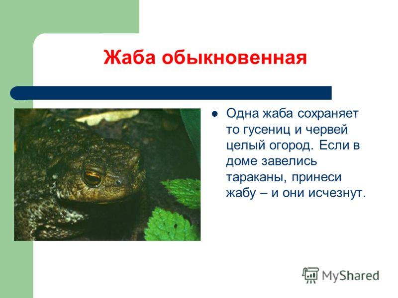 Жаба обыкновенная Одна жаба сохраняет то гусениц и червей целый огород. Если в доме завелись тараканы, принеси жабу – и они исчезнут.