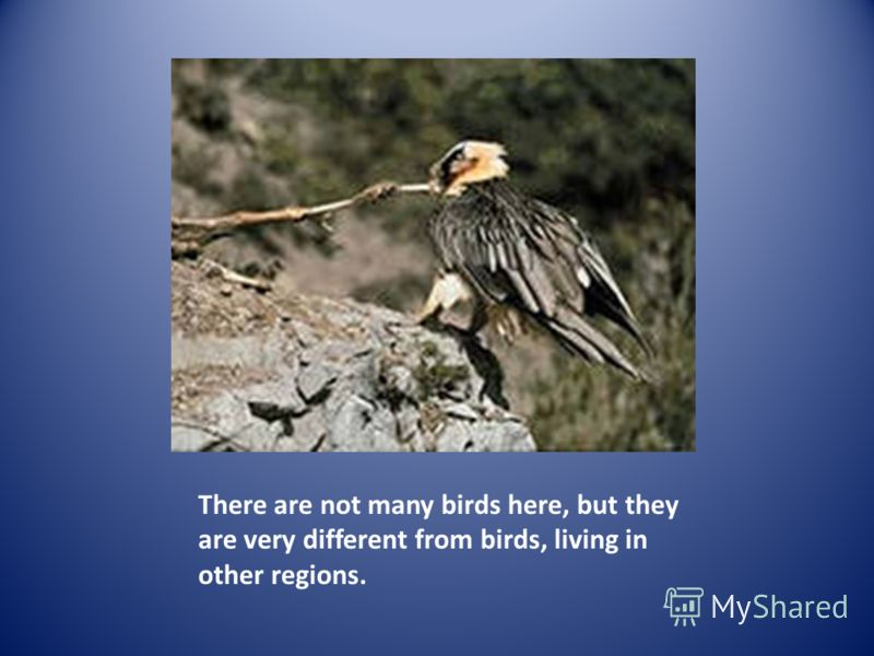 There are not many birds here, but they are very different from birds, living in other regions.