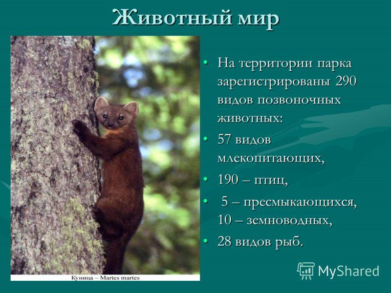 Животный мир На территории парка зарегистрированы 290 видов позвоночных животных: 57 видов млекопитающих, 190 – птиц, 5 – пресмыкающихся, 10 – земноводных, 28 видов рыб.