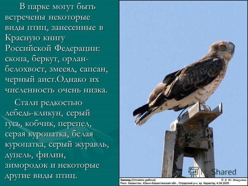 В парке могут быть встречены некоторые виды птиц, занесенные в Красную книгу Российской Федерации: скопа, беркут, орлан- белохвост, змееяд, сапсан, черный аист.Однако их численность очень низка. В парке могут быть встречены некоторые виды птиц, занес