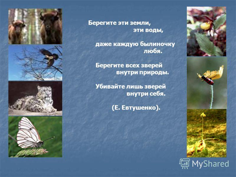 Берегите эти земли, эти воды, даже каждую былиночку любя. Берегите всех зверей внутри природы. Убивайте лишь зверей внутри себя. (Е. Евтушенко).