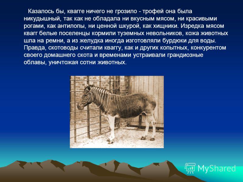 Казалось бы, квагге ничего не грозило - трофей она была никудышный, так как не обладала ни вкусным мясом, ни красивыми рогами, как антилопы, ни ценной шкурой, как хищники. Изредка мясом квагг белые поселенцы кормили туземных невольников, кожа животны
