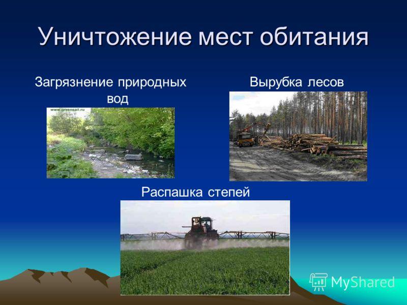 Уничтожение мест обитания Загрязнение природных вод Вырубка лесов Распашка степей