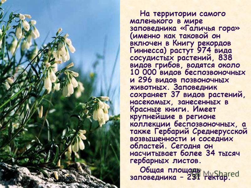 На территории самого маленького в мире заповедника «Галичья гора» (именно как таковой он включен в Книгу рекордов Гиннесса) растут 974 вида сосудистых растений, 838 видов грибов, водятся около 10 000 видов беспозвоночных и 296 видов позвоночных живот