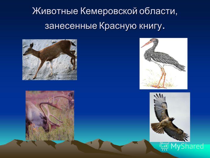 Животные Кемеровской области, занесенные Красную книгу.