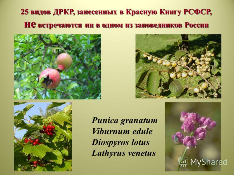25 видов ДРКР, занесенных в Красную Книгу РСФСР, не встречаются ни в одном из заповедников России Punica granatum Viburnum edule Diospyros lotus Lathyrus venetus