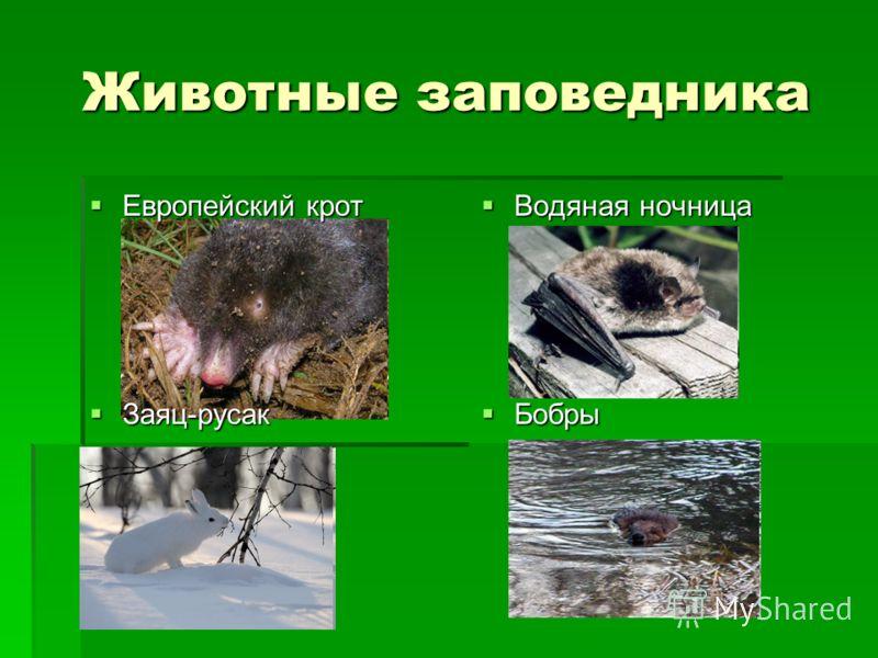 Животные заповедника Европейский крот Европейский крот Водяная ночница Водяная ночница Заяц-русак Заяц-русак Бобры Бобры