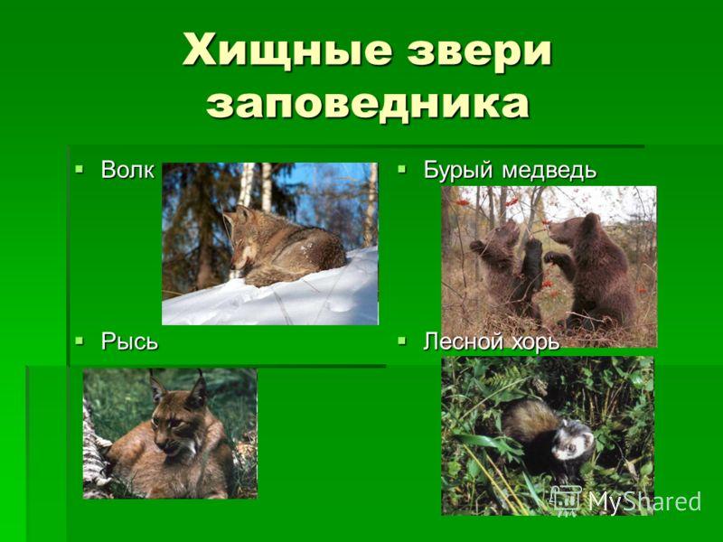 Хищные звери заповедника Волк Волк Бурый медведь Бурый медведь Рысь Рысь Лесной хорь Лесной хорь
