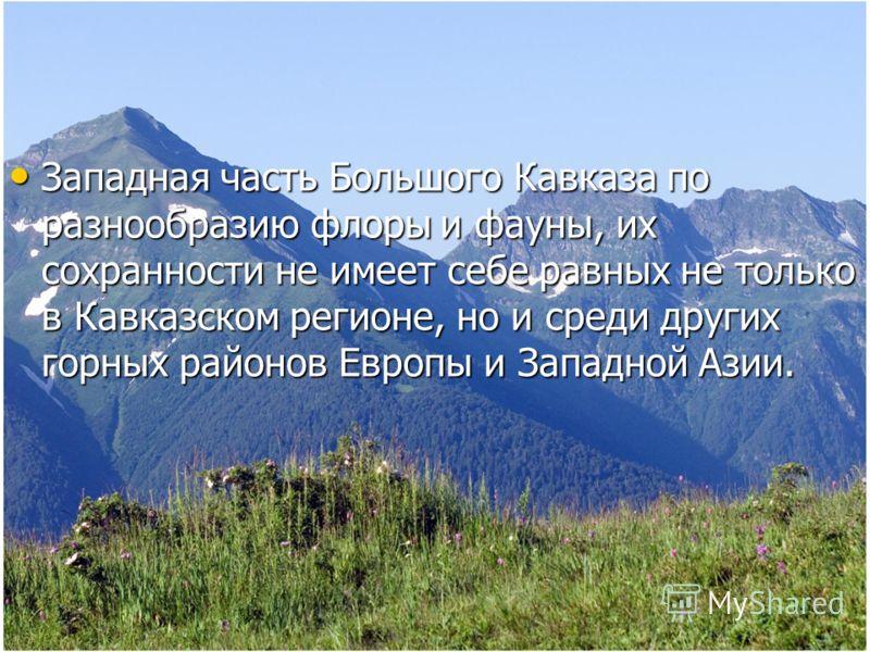 Западная часть Большого Кавказа по разнообразию флоры и фауны, их сохранности не имеет себе равных не только в Кавказском регионе, но и среди других горных районов Европы и Западной Азии. Западная часть Большого Кавказа по разнообразию флоры и фауны,