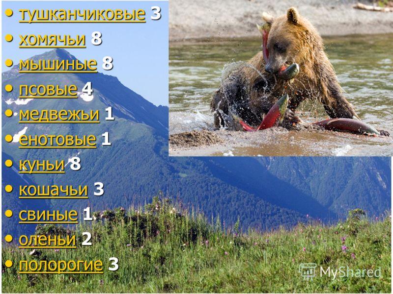 тушканчиковые 3 тушканчиковые 3 тушканчиковые хомячьи 8 хомячьи 8 хомячьи мышиные 8 мышиные 8 мышиные псовые 4 псовые 4 псовые медвежьи 1 медвежьи 1 медвежьи енотовые 1 енотовые 1 енотовые куньи 8 куньи 8 куньи кошачьи 3 кошачьи 3 кошачьи свиные 1 св