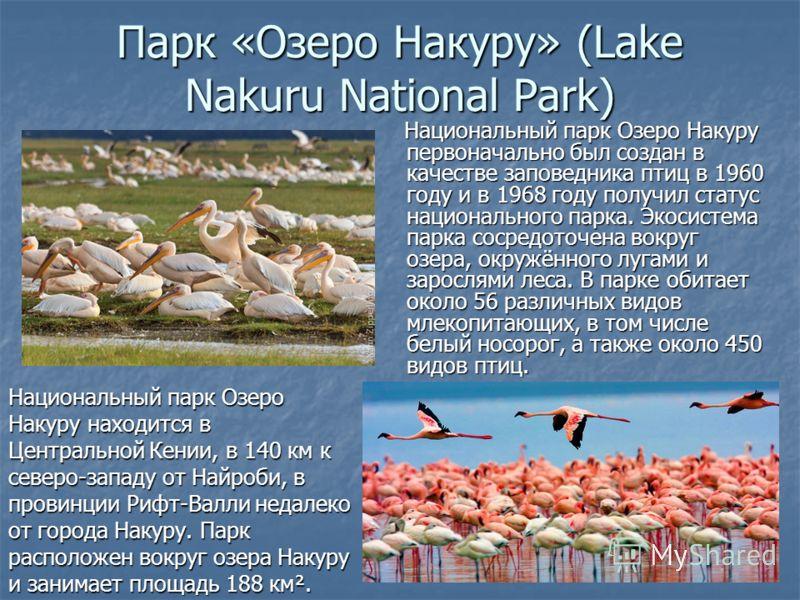Парк «Озеро Накуру» (Lake Nakuru National Park) Национальный парк Озеро Накуру первоначально был создан в качестве заповедника птиц в 1960 году и в 1968 году получил статус национального парка. Экосистема парка сосредоточена вокруг озера, окружённого