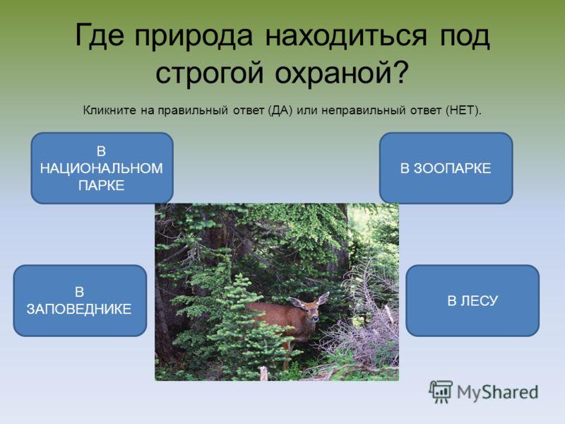 Где природа находиться под строгой охраной? Кликните на правильный ответ (ДА) или неправильный ответ (НЕТ). В ЗАПОВЕДНИКЕ В ЗООПАРКЕ В ЛЕСУ В НАЦИОНАЛЬНОМ ПАРКЕ