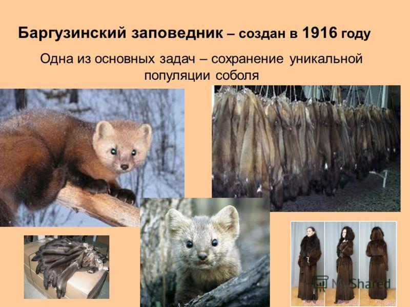 Баргузинский заповедник – создан в 1916 году Одна из основных задач – сохранение уникальной популяции соболя