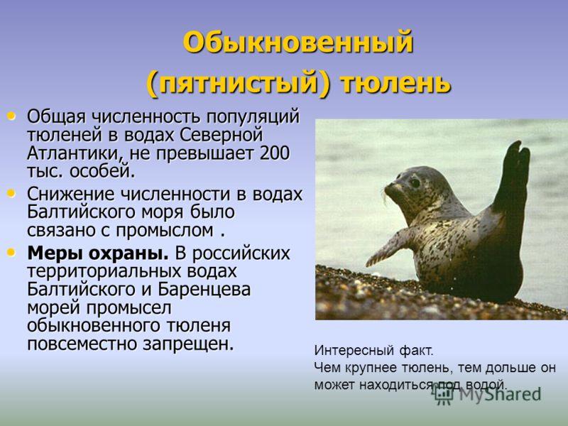 Обыкновенный (пятнистый) тюлень Общая численность популяций тюленей в водах Северной Атлантики, не превышает 200 тыс. особей. Общая численность популяций тюленей в водах Северной Атлантики, не превышает 200 тыс. особей. Снижение численности в водах Б
