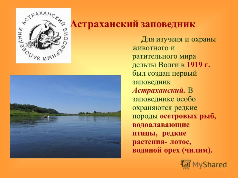 Для изучеия и охраны животного и ратительного мира дельты Волги в 1919 г. был создан первый заповедник Астраханский. В заповеднике особо охраняются редкие породы осетровых рыб, водоалавающие птицы, редкие растения- лотос, водяной орех (чилим). Астрах