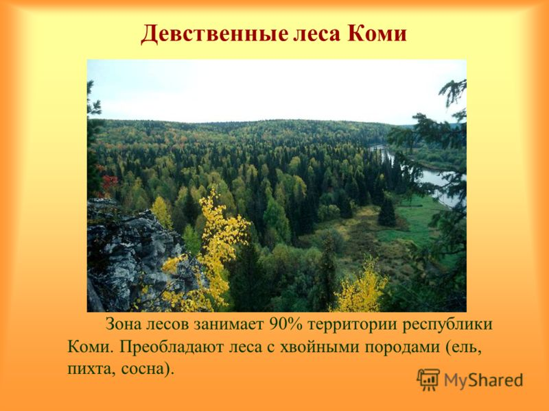 Девственные леса Коми Зона лесов занимает 90% территории республики Коми. Преобладают леса с хвойными породами (ель, пихта, сосна).