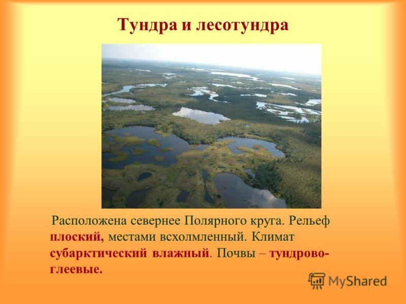 Тундра и лесотундра Расположена севернее Полярного круга. Рельеф плоский, местами всхолмленный. Климат субарктический влажный. Почвы – тундрово- глеевые.