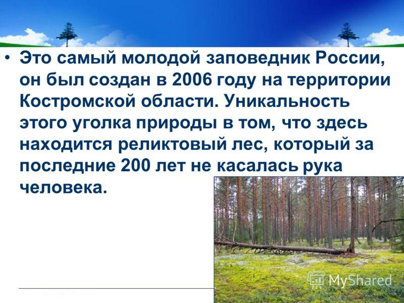 Это самый молодой заповедник России, он был создан в 2006 году на территории Костромской области. Уникальность этого уголка природы в том, что здесь находится реликтовый лес, который за последние 200 лет не касалась рука человека.