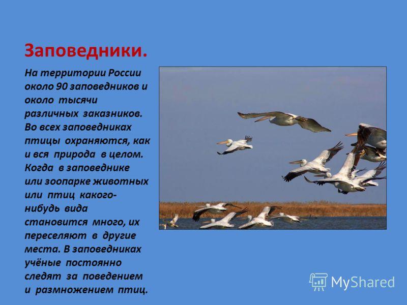 Заповедники. На территории России около 90 заповедников и около тысячи различных заказников. Во всех заповедниках птицы охраняются, как и вся природа в целом. Когда в заповеднике или зоопарке животных или птиц какого- нибудь вида становится много, их