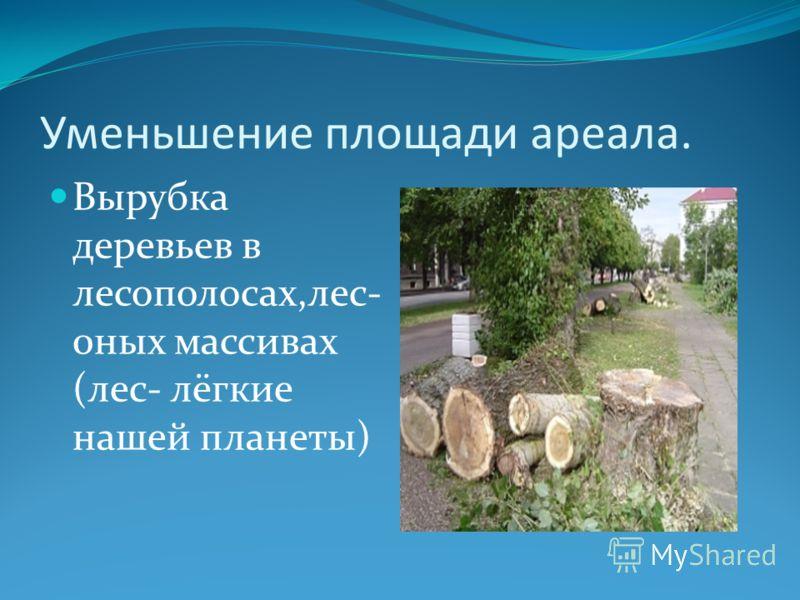 Уменьшение площади ареала. Вырубка деревьев в лесополосах,лес- 0ных массивах (лес- лёгкие нашей планеты)