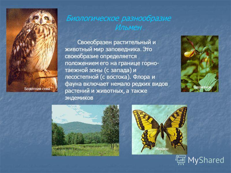 Биологическое разнообразие Ильмен. Своеобразен растительный и животный мир заповедника. Это своеобразие определяется положением его на границе горно- таежной зоны (с запада) и лесостепной (с востока). Флора и фауна включает немало редких видов растен
