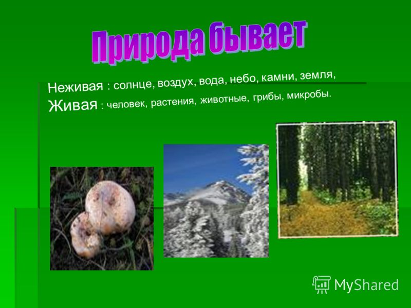Неживая : солнце, воздух, вода, небо, камни, земля, Живая : человек, растения, животные, грибы, микробы.
