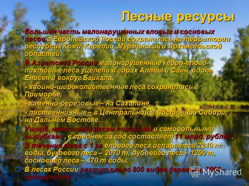 Лесные ресурсы Большая часть малонарушенных еловых и сосновых лесов в Европейской России сохранилась на территории республик Коми, Карелии, Мурманской и Архангельской областей. Большая часть малонарушенных еловых и сосновых лесов в Европейской России