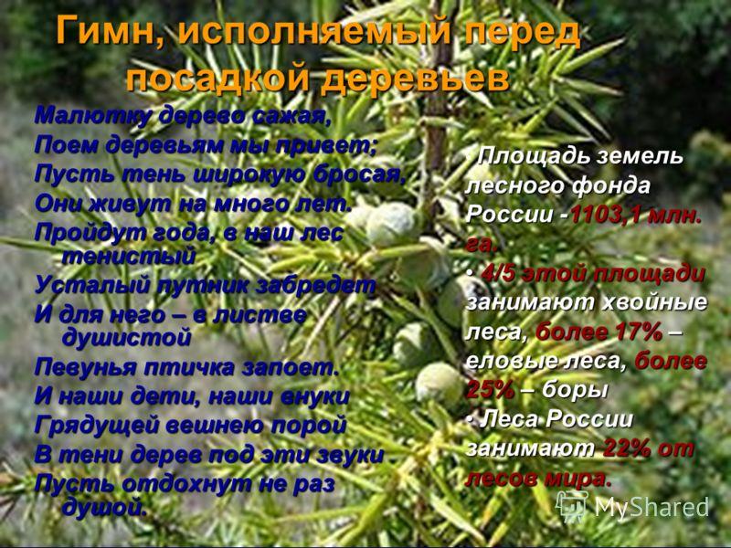 Гимн, исполняемый перед посадкой деревьев Малютку деpево сажая, Поем деpевьям мы пpивет; Пусть тень шиpокую бpосая, Они живут на много лет. Пpойдут года, в наш лес тенистый Усталый путник забpедет И для него – в листве душистой Певунья птичка запоет.
