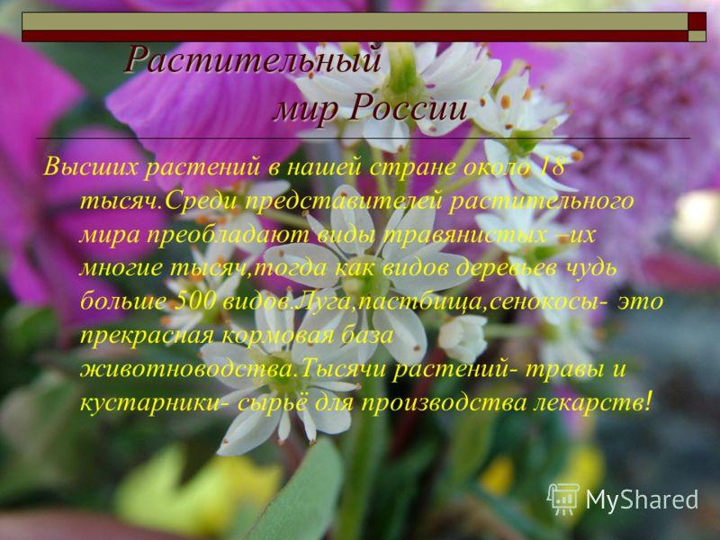 Растительный мир России Высших растений в нашей стране около 18 тысяч.Среди представителей растительного мира преобладают виды травянистых –их многие тысяч,тогда как видов деревьев чудь больше 500 видов.Луга,пастбища,сенокосы- это прекрасная кормовая