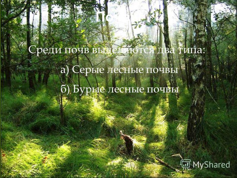 Почвы Среди почв выделяются два типа: а) Серые лесные почвы б) Бурые лесные почвы