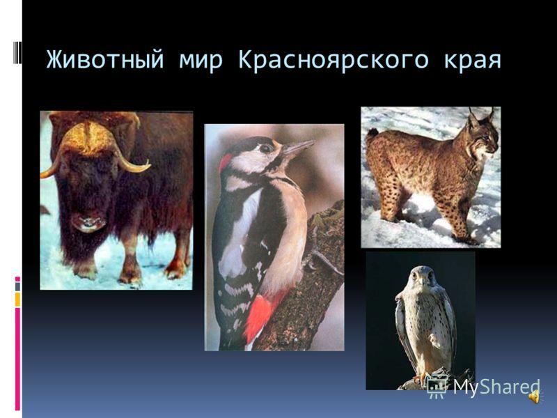 Центрально- Сибирский Организован в 1985 году на территориии Туруханского района Красноярского края. Цель: охрана эталонного участка средней тайги