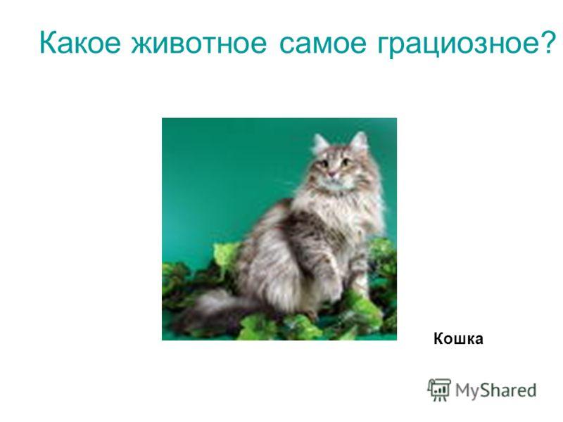 Какое животное самое грациозное? Кошка