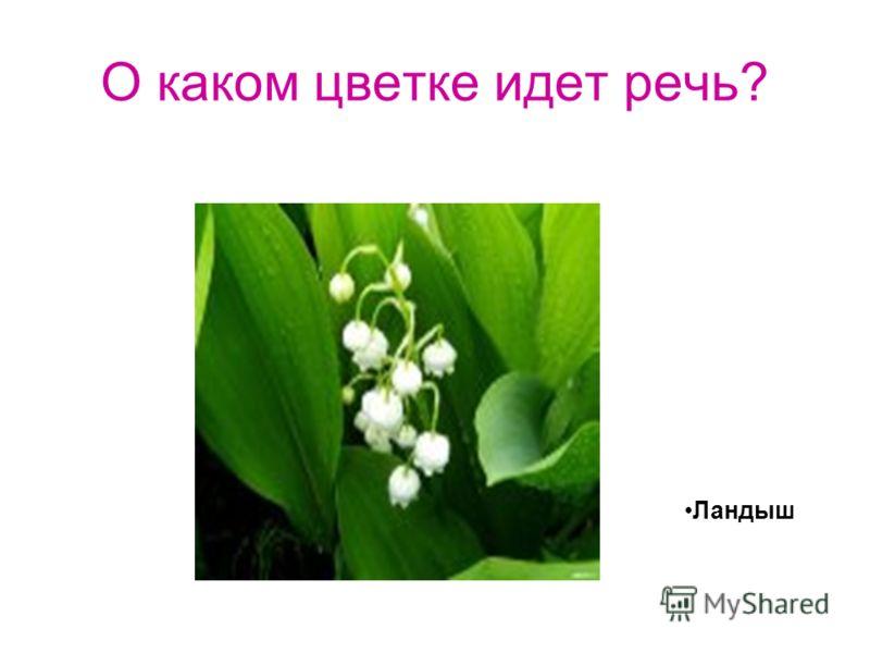 О каком цветке идет речь? Ландыш