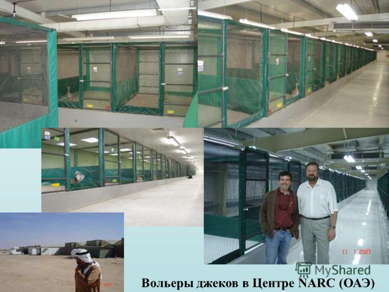 Вольеры джеков в Центре NARC (ОАЭ)