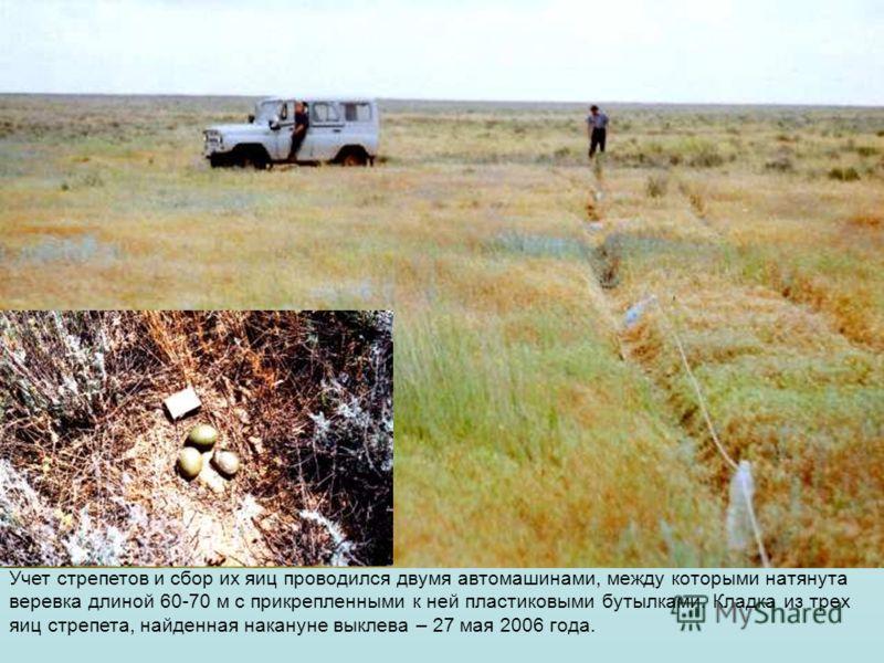 Учет стрепетов и сбор их яиц проводился двумя автомашинами, между которыми натянута веревка длиной 60-70 м с прикрепленными к ней пластиковыми бутылками. Кладка из трех яиц стрепета, найденная накануне выклева – 27 мая 2006 года.