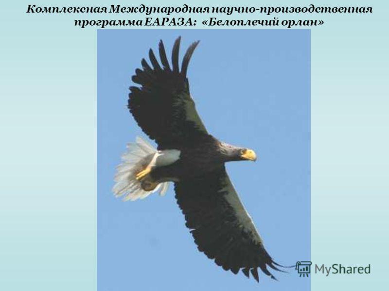 Комплексная Международная научно-производственная программа ЕАРАЗА: «Белоплечий орлан»