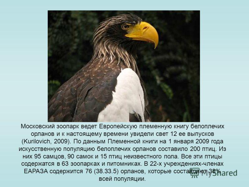 Московский зоопарк ведет Европейскую племенную книгу белоплечих орланов и к настоящему времени увидели свет 12 ее выпусков (Kurilovich, 2009). По данным Племенной книги на 1 января 2009 года искусственную популяцию белоплечих орланов составило 200 пт