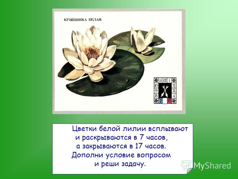 Цветки белой лилии всплывают и раскрываются в 7 часов, а закрываются в 17 часов. Дополни условие вопросом и реши задачу.