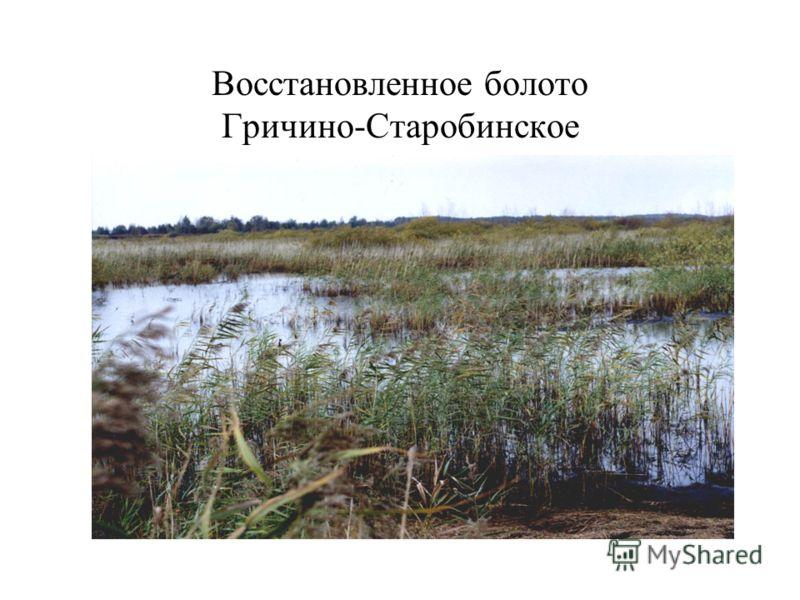 Восстановленное болото Гричино-Старобинское