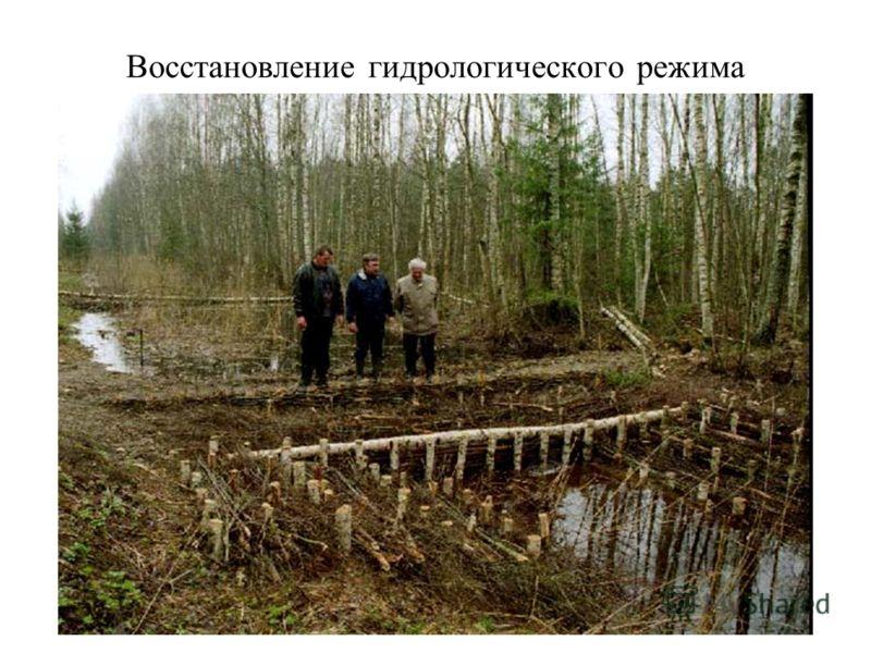 Восстановление гидрологического режима