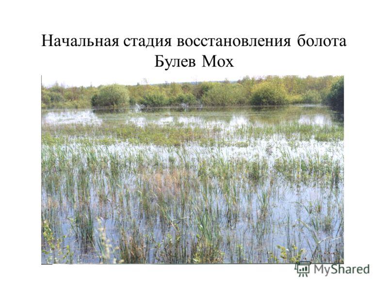 Начальная стадия восстановления болота Булев Мох
