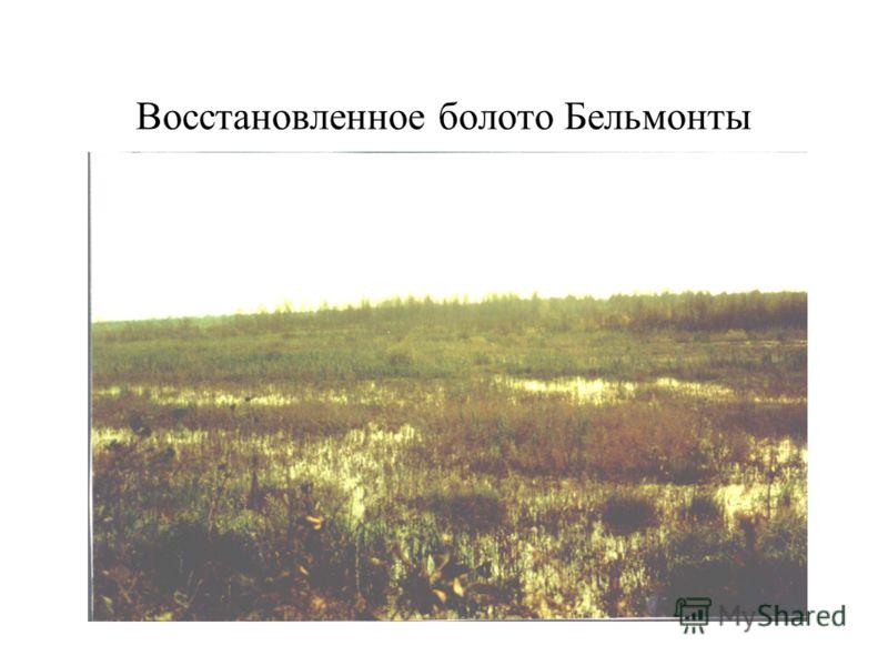 Восстановленное болото Бельмонты