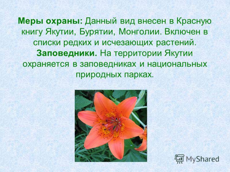 Меры охраны: Данный вид внесен в Красную книгу Якутии, Бурятии, Монголии. Включен в списки редких и исчезающих растений. Заповедники. На территории Якутии охраняется в заповедниках и национальных природных парках.