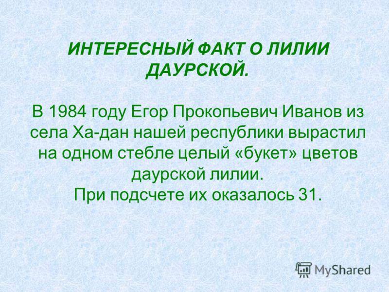 ИНТЕРЕСНЫЙ ФАКТ О ЛИЛИИ ДАУРСКОЙ. В 1984 году Егор Прокопьевич Иванов из села Ха-дан нашей республики вырастил на одном стебле целый «букет» цветов даурской лилии. При подсчете их оказалось 31.